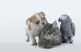 veterinario perro gato exoticos loro