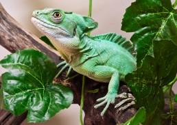 veterinario exoticos lagarto reptiles tortuga Bilbao