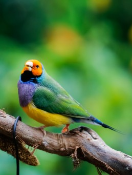 veterinario bilbao aves pajaro canario agaporni loro exoticos