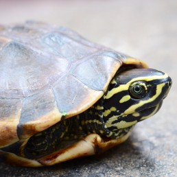 veterinario bilbao exoticos tortuga